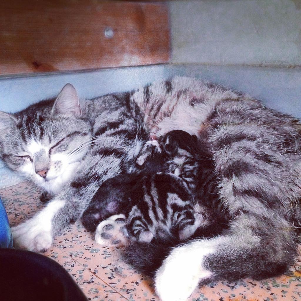 Maman et ses petits nés au refuge