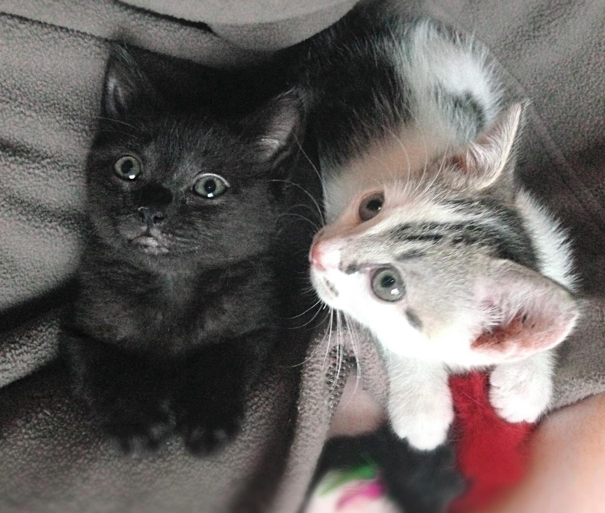 Nouky et Molly